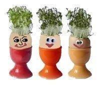Как вырастить салат в яйце